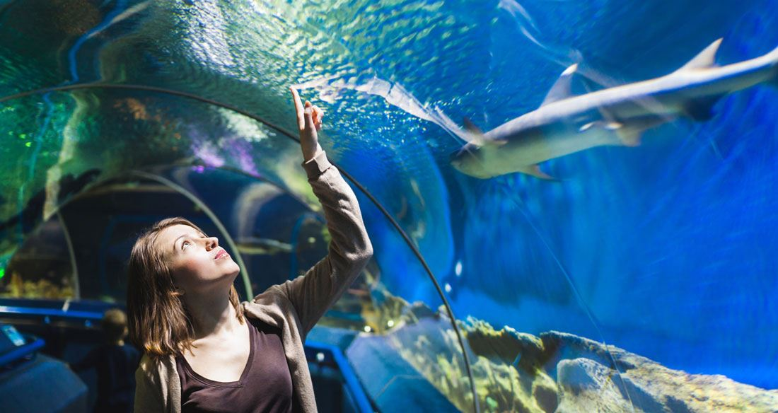 Picture for category Aquarium and Zoo