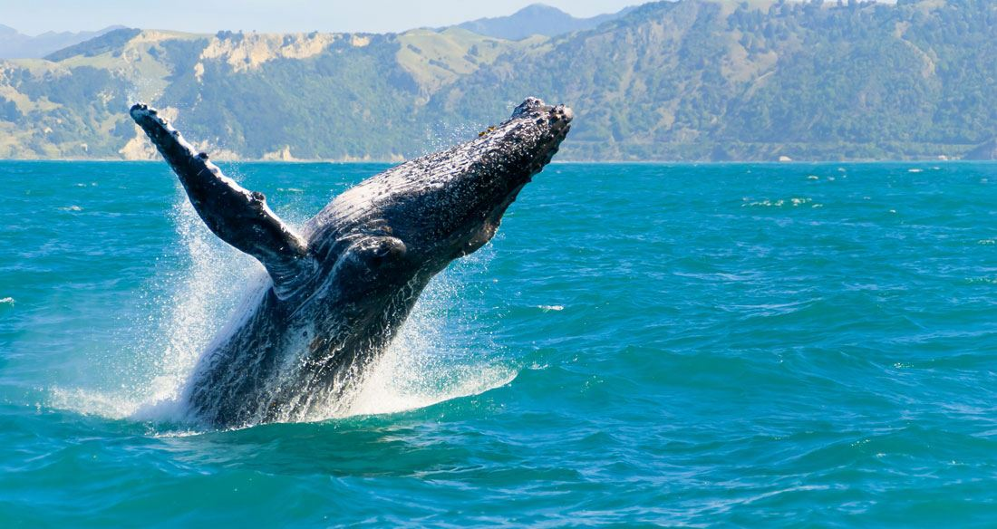 Picture for category Dolphin and Whale