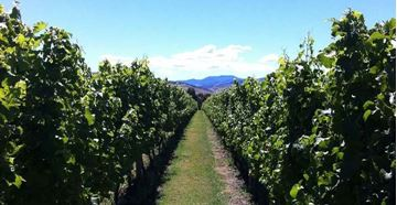 Picture of Full Day Food and Wine tour - Hobart