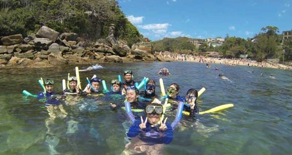 Picture of Manly Snorkelling Tour (Adult)