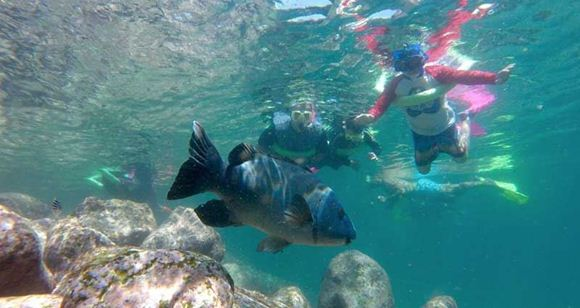 Picture of Manly Snorkelling Tour (Family Pass)