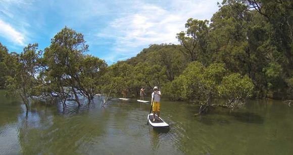 Picture of Sydney Stand Up Paddle Boarding Safari - Adult