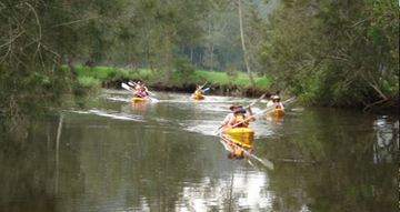 Picture of Kayak Tour with Oysters, Wine and Lunch - Glenworth Valley