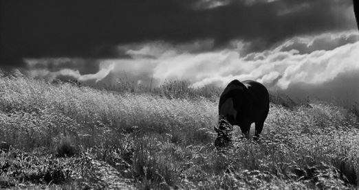 Wildlife Photography Workshop - Canberra (3 Hours)