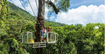 Picture of Jungle Surfing Canopy Tours Cairns