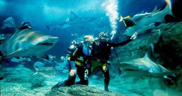 Picture of Shark Dive Xtreme – Certified Diver (Melbourne Aquarium)