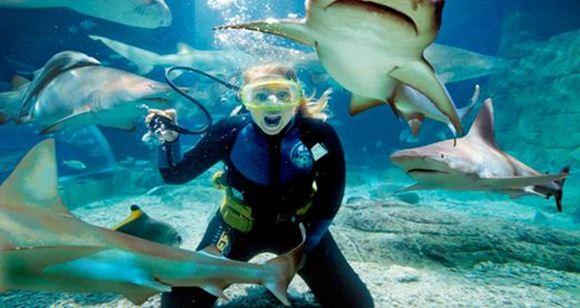 Picture of Shark Dive Xtreme – Non-Certified Diver (Melbourne Aquarium)