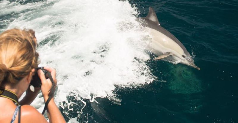 Dolphin Watch Cruise - Port Stephens (Adult)