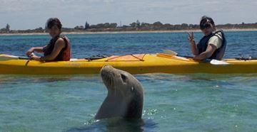Picture of Seal & Penguin Islands Sea Kayak Day Tour (Adult)