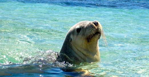 Seal And Penguin Islands Sea Kayak Day Tour (Child under 16)
