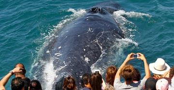 Picture of Spirit of Gold Coast Whale Watching (Family)