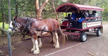 Picture of Gourmet Trail Swan Valley on a horse drawn wagon