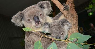 Picture of Sydney Wildlife World Family Pass