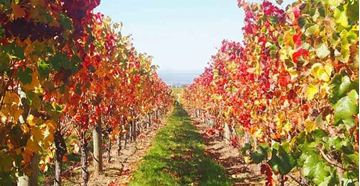 Picture of Full Day Tamar Valley Wine Tour (4 People)
