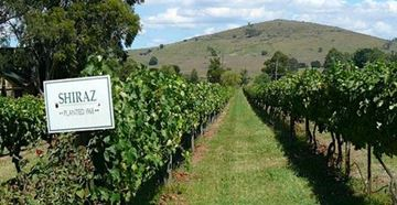 Picture of Daily Wine Region Tour one day -   Victoria