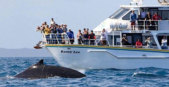 Picture of Winter Whale Cruise (Family) - Phillip Island