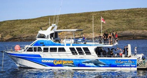 Picture of Swim with Sea Lions Tour  Adult – Port Lincoln