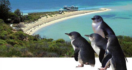 Penguin Island & Dolphin Watch Adventure Cruise (Child)