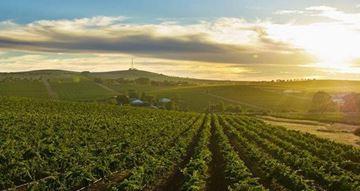 Picture of Prestige Wine Tour Barossa or McLaren Vale - 2 people