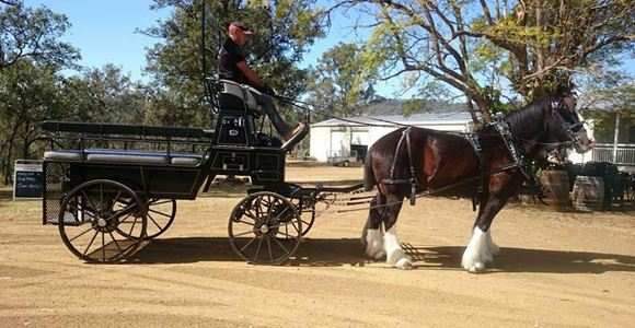 Picture of Shire Horse Drawn Winery, Vineyard and Brewery Tour